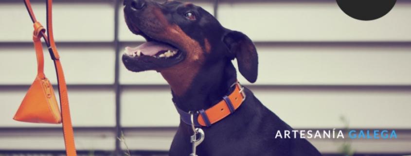 bichoh-collares-perro